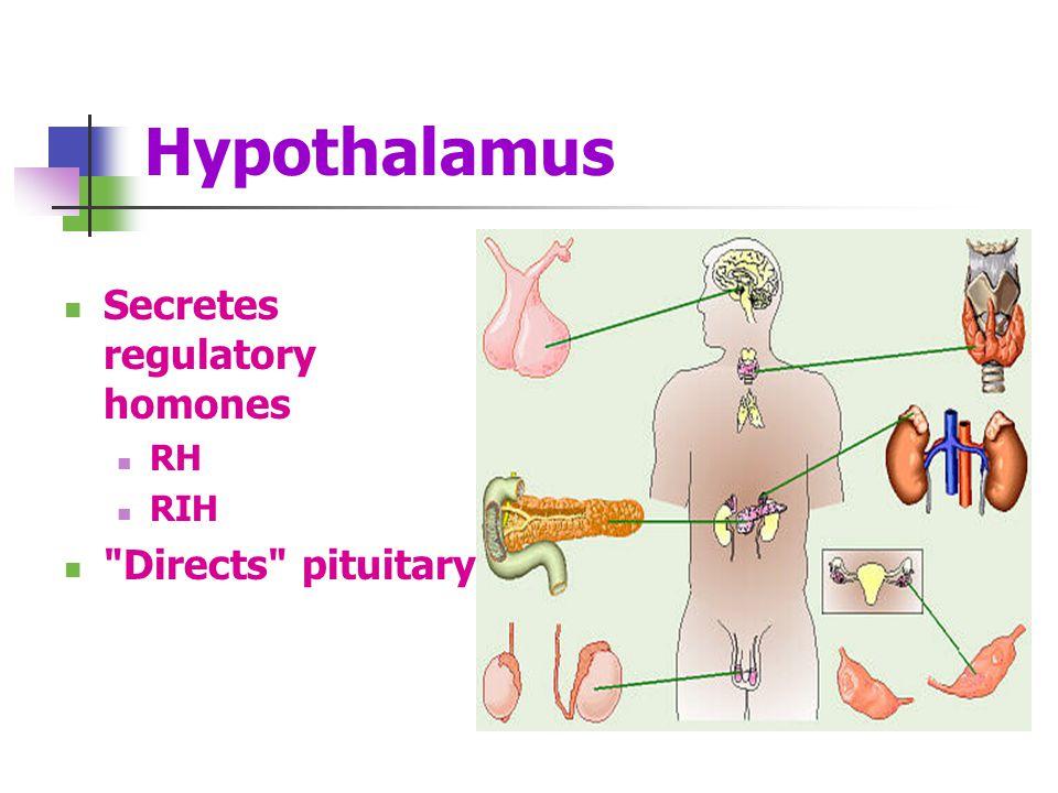 Hypothalamus Secretes regulatory homones RH RIH