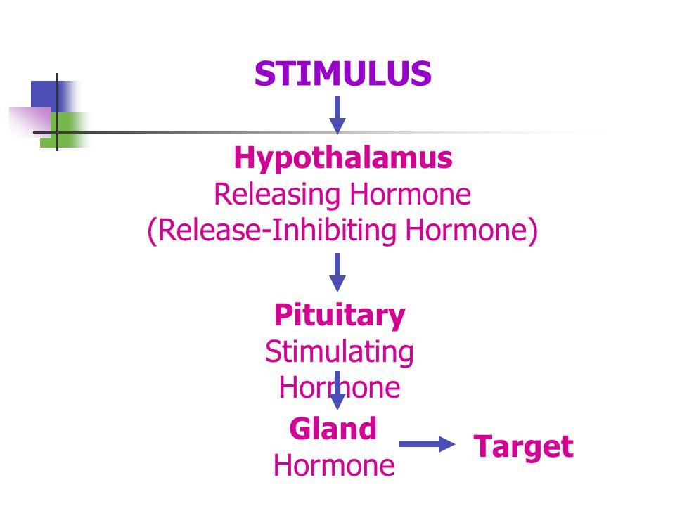 STIMULUS Hypothalamus Releasing Hormone (Release-Inhibiting Hormone) Pituitary Stimulating Hormone Gland Hormone Target