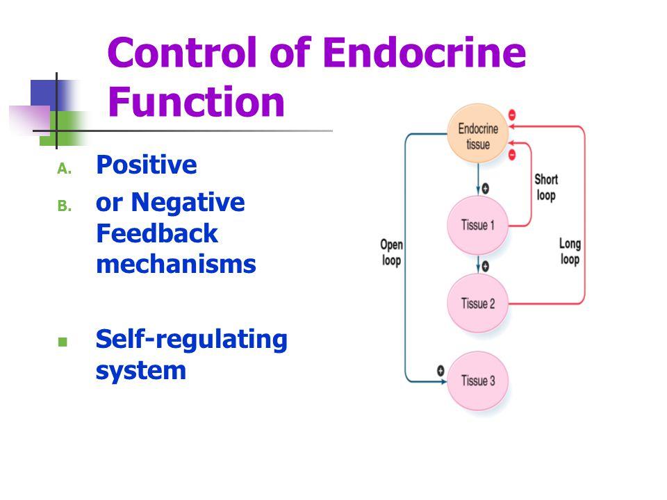 Control of Endocrine Function A. Positive B. or Negative Feedback mechanisms Self-regulating system