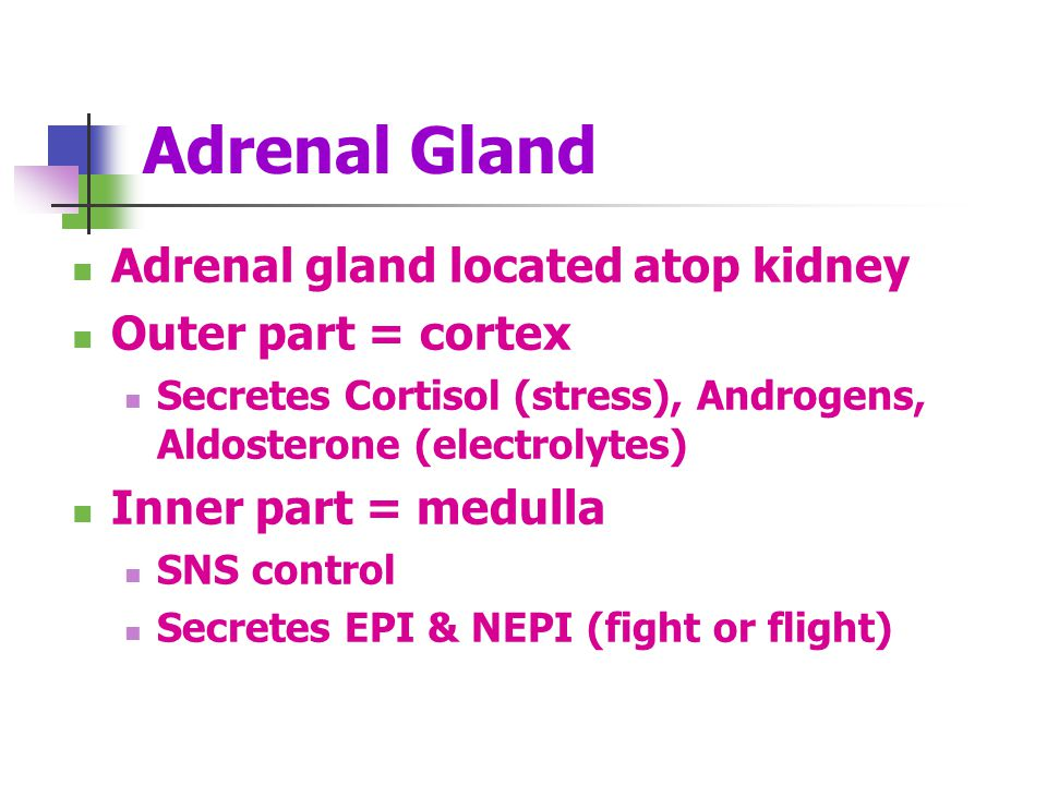 Adrenal Gland Adrenal gland located atop kidney Outer part = cortex Secretes Cortisol (stress), Androgens, Aldosterone (electrolytes) Inner part = med
