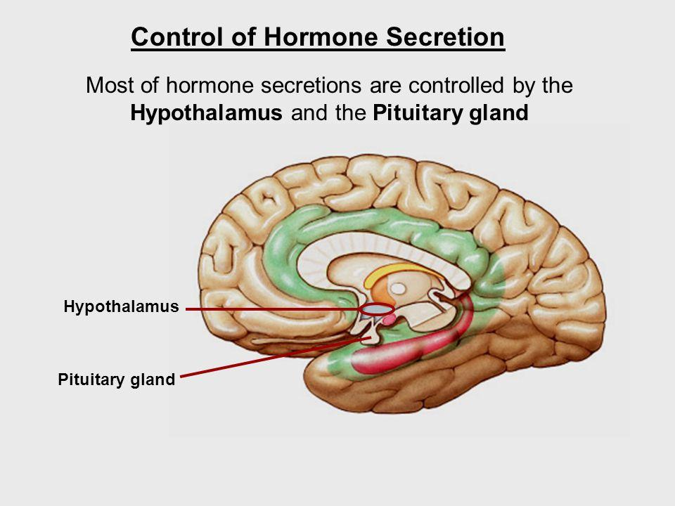 Hypothalamus Control of Hormone Secretion Most of hormone secretions are controlled by the Hypothalamus and the Pituitary gland Pituitary gland