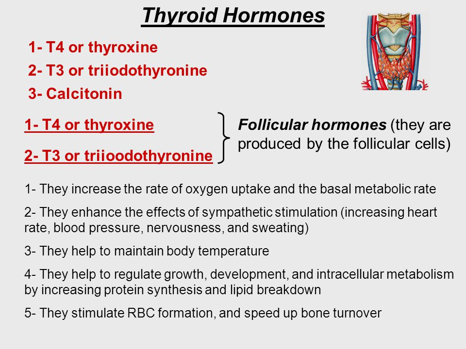 Thyroid Hormones 1- T4 or thyroxine 2- T3 or triioodothyronine Follicular hormones (they are produced by the follicular cells) 1- They increase the ra