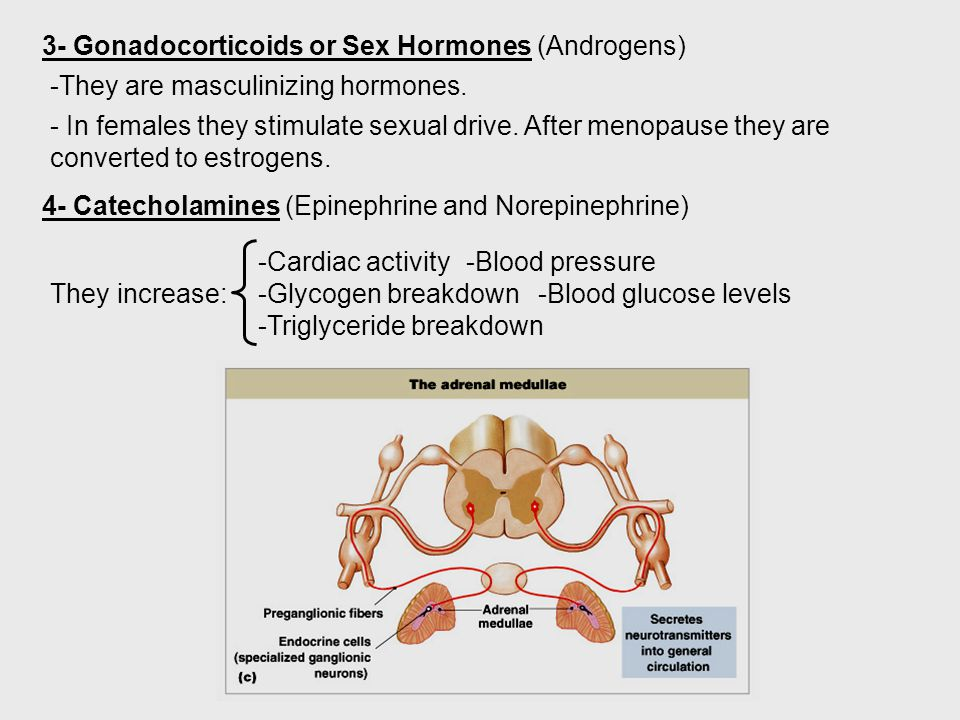 3- Gonadocorticoids or Sex Hormones (Androgens) -They are masculinizing hormones. - In females they stimulate sexual drive. After menopause they are c
