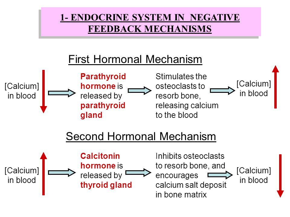 [Calcium] in blood Parathyroid hormone is released by parathyroid gland Stimulates the osteoclasts to resorb bone, releasing calcium to the blood Firs