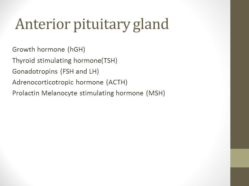 Anterior pituitary gland Growth hormone (hGH) Thyroid stimulating hormone(TSH) Gonadotropins (FSH and LH) Adrenocorticotropic hormone (ACTH) Prolactin