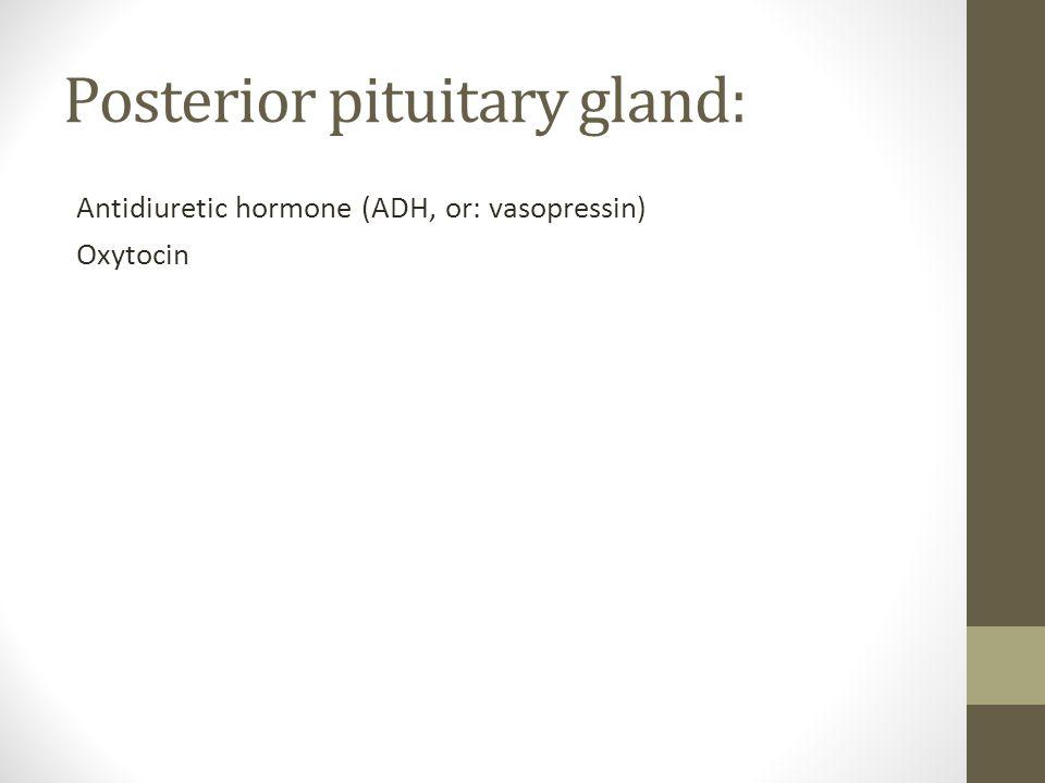 Posterior pituitary gland: Antidiuretic hormone (ADH, or: vasopressin) Oxytocin