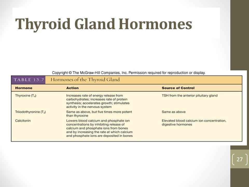 Thyroid Gland Hormones 27
