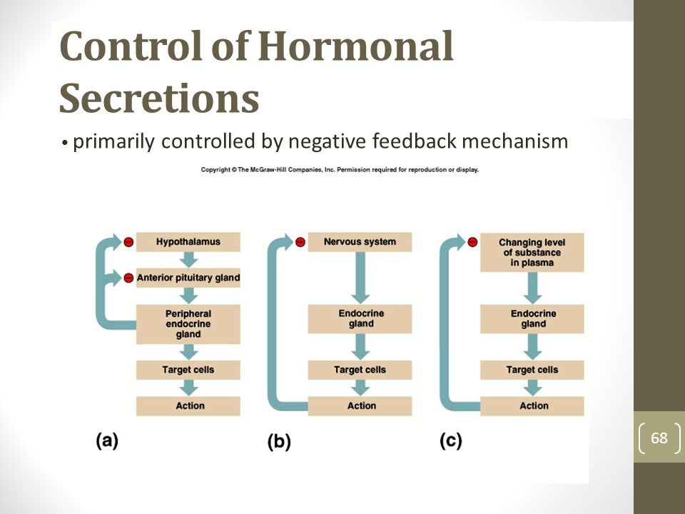 Control of Hormonal Secretions 68 primarily controlled by negative feedback mechanism