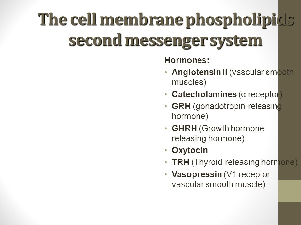 The cell membrane phospholipids second messenger system Hormones: Angiotensin II (vascular smooth muscles) Catecholamines (α receptor) GRH (gonadotrop