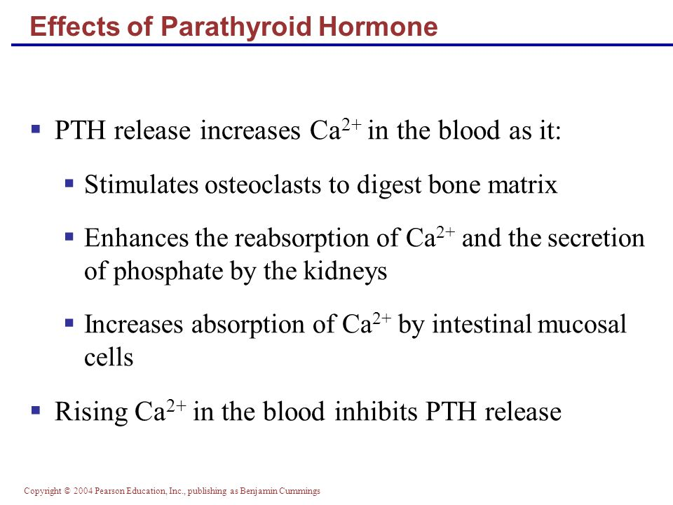 Copyright © 2004 Pearson Education, Inc., publishing as Benjamin Cummings PTH release increases Ca 2+ in the blood as it: Stimulates osteoclasts to di