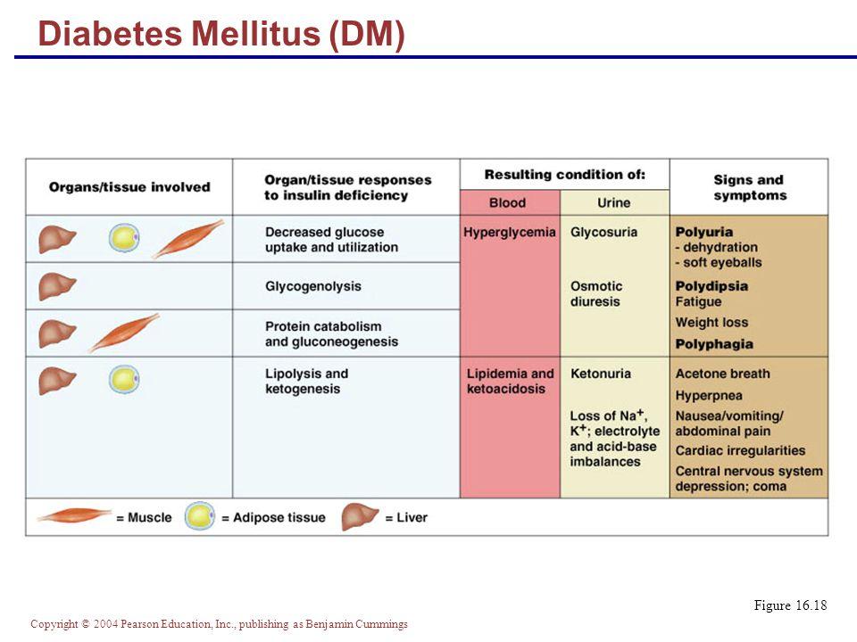 Copyright © 2004 Pearson Education, Inc., publishing as Benjamin Cummings Figure 16.18 Diabetes Mellitus (DM)