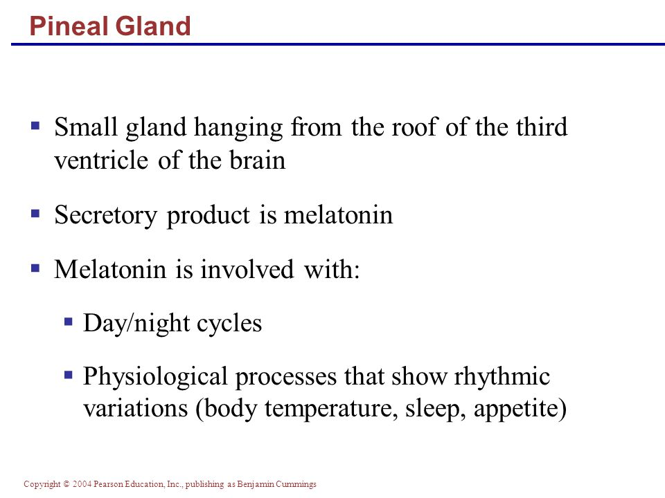 Copyright © 2004 Pearson Education, Inc., publishing as Benjamin Cummings Small gland hanging from the roof of the third ventricle of the brain Secret