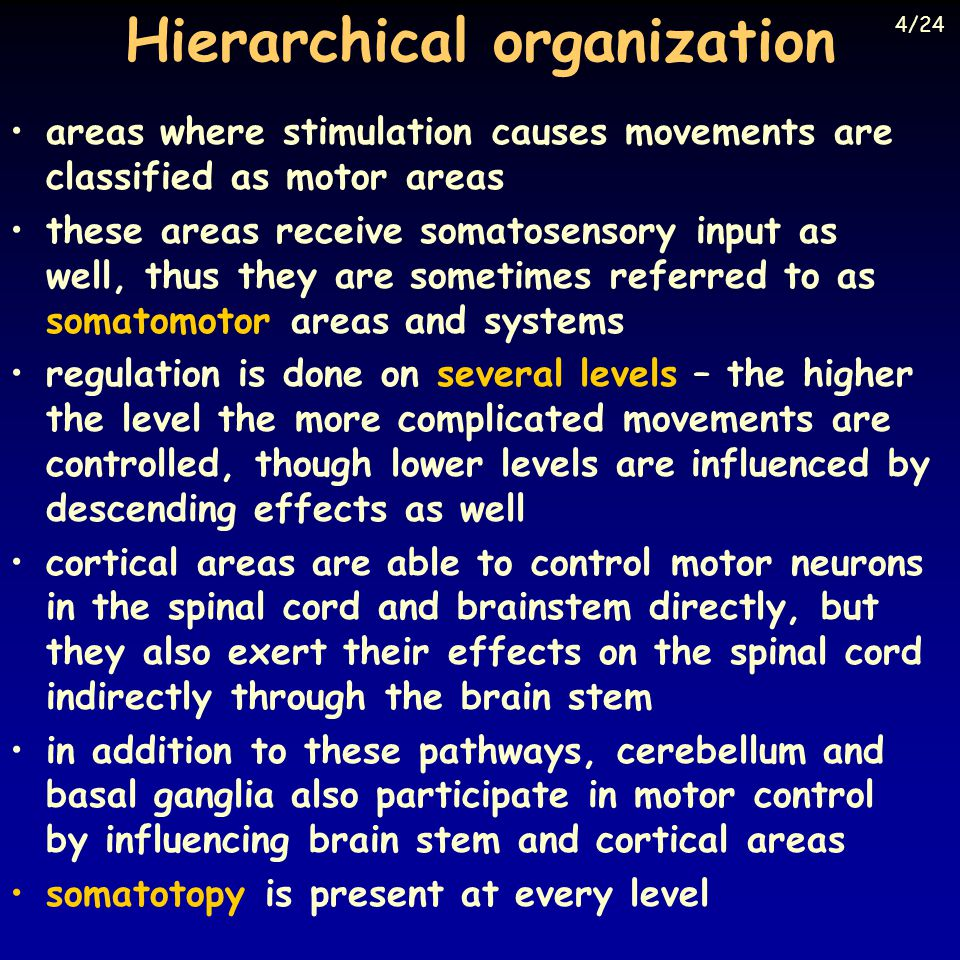 Hierarchical organization areas where stimulation causes movements are classified as motor areas these areas receive somatosensory input as well, thus