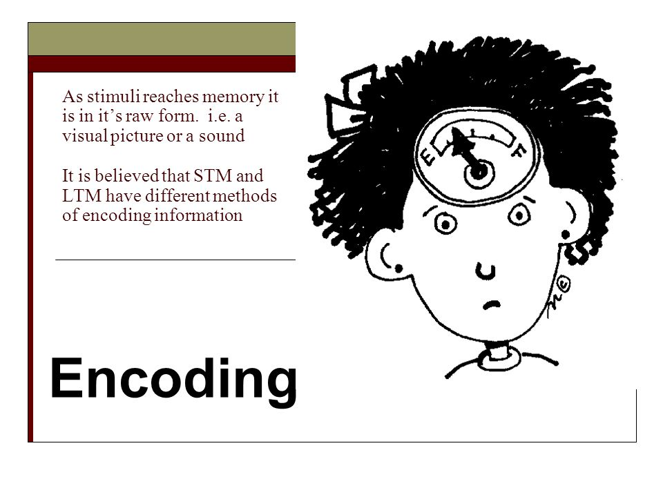 As stimuli reaches memory it is in its raw form. i.e. a visual picture or a sound It is believed that STM and LTM have different methods of encoding i