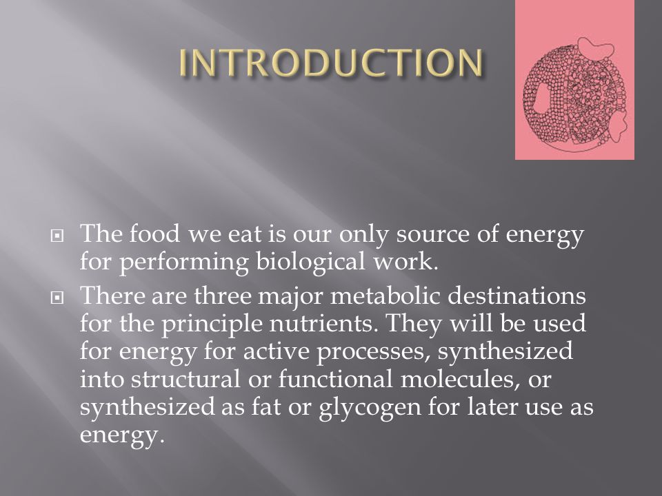The food we eat is our only source of energy for performing biological work.