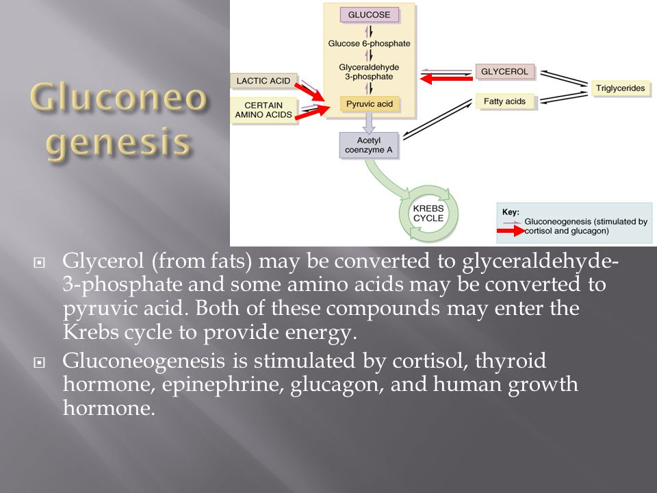 Gluconeogenesis is the conversion of protein or fat molecules into glucose (Figure 25.12).