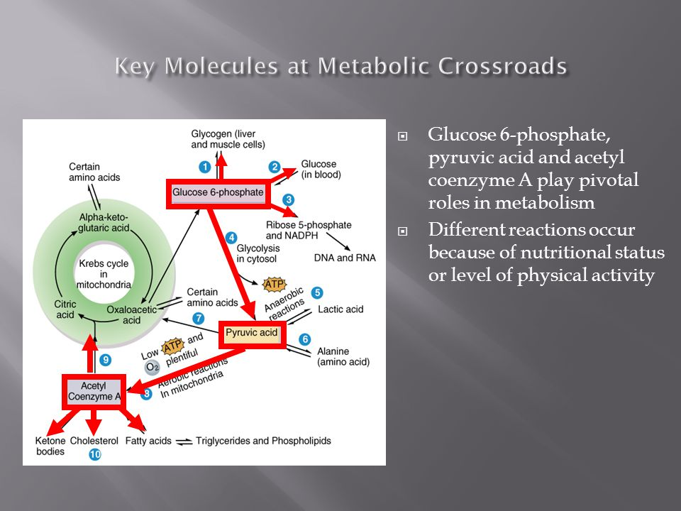 Although there are thousands of different chemicals in your cells, three molecules play key roles in metabolism glucose-6-phosphate pyruvic acid acety