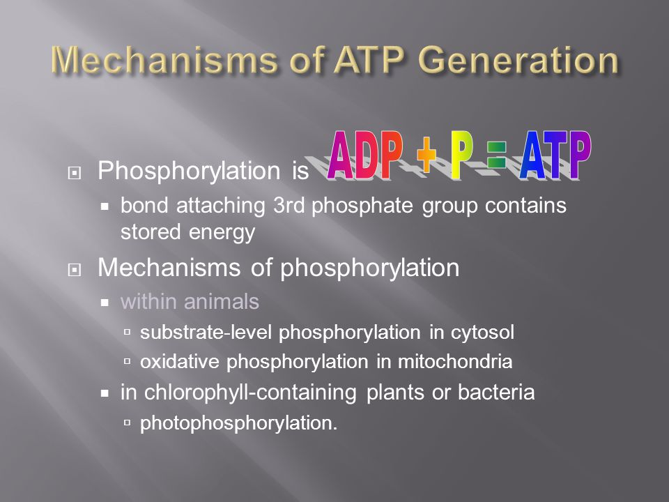 Phosphorylation is bond attaching 3rd phosphate group contains stored energy Mechanisms of phosphorylation within animals substrate-level phosphorylation in cytosol oxidative phosphorylation in mitochondria in chlorophyll-containing plants or bacteria photophosphorylation.