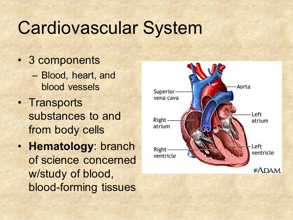 Cardiovascular System 3 components –Blood, heart, and blood vessels Transports substances to and from body cells Hematology: branch of science concerned w/study of blood, blood-forming tissues