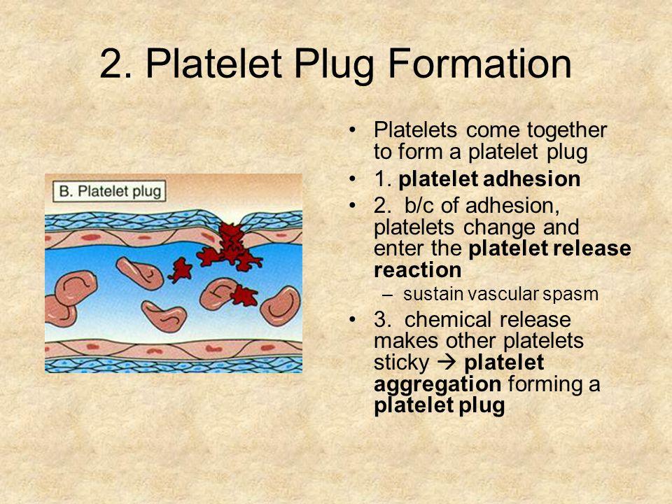 2.Platelet Plug Formation Platelets come together to form a platelet plug 1.