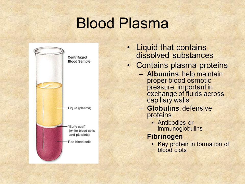 Blood Plasma Liquid that contains dissolved substances Contains plasma proteins –Albumins: help maintain proper blood osmotic pressure, important in exchange of fluids across capillary walls –Globulins: defensive proteins Antibodies or immunoglobulins –Fibrinogen Key protein in formation of blood clots