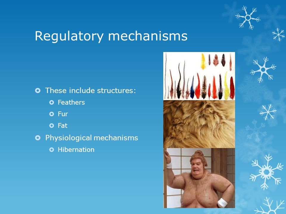 Regulatory mechanisms These include structures: Feathers Fur Fat Physiological mechanisms Hibernation