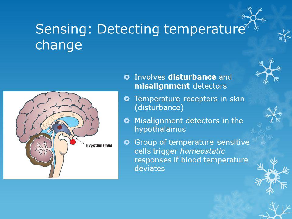 Involves disturbance and misalignment detectors Temperature receptors in skin (disturbance) Misalignment detectors in the hypothalamus Group of temper