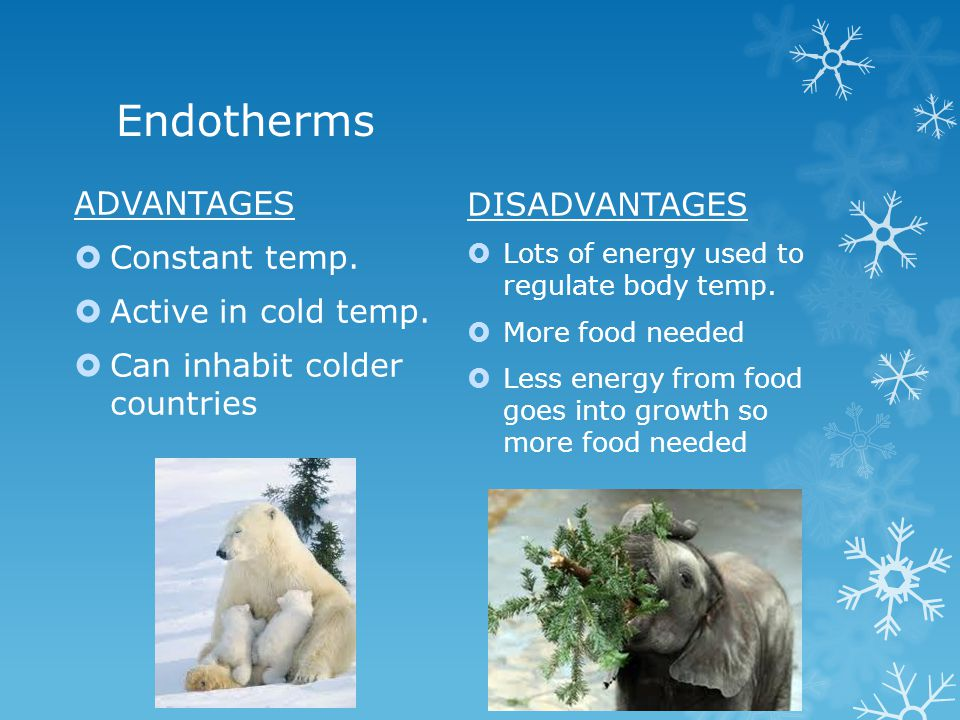 Endotherms ADVANTAGES Constant temp. Active in cold temp. Can inhabit colder countries DISADVANTAGES Lots of energy used to regulate body temp. More f