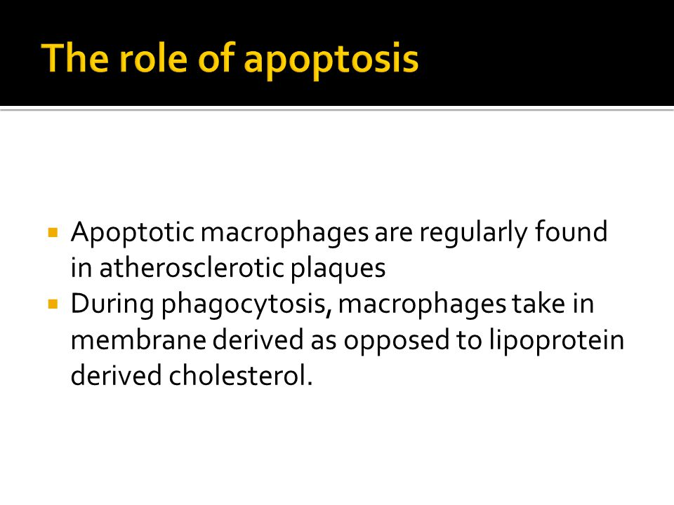During phagocytosis, macrophages take in membrane derived as opposed to lipoprotein derived cholesterol.