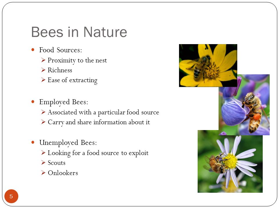 Bees in Nature Food Sources: Proximity to the nest Richness Ease of extracting Employed Bees: Associated with a particular food source Carry and share