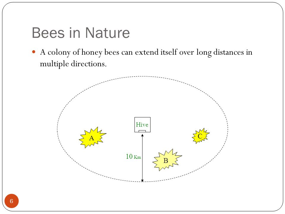 Bees in Nature 6 A colony of honey bees can extend itself over long distances in multiple directions. 10 Km A C B Hive