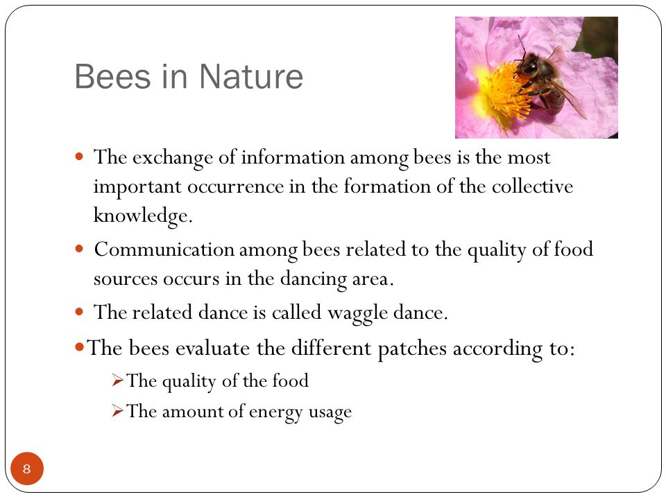 Bees in Nature 8 The exchange of information among bees is the most important occurrence in the formation of the collective knowledge. Communication a
