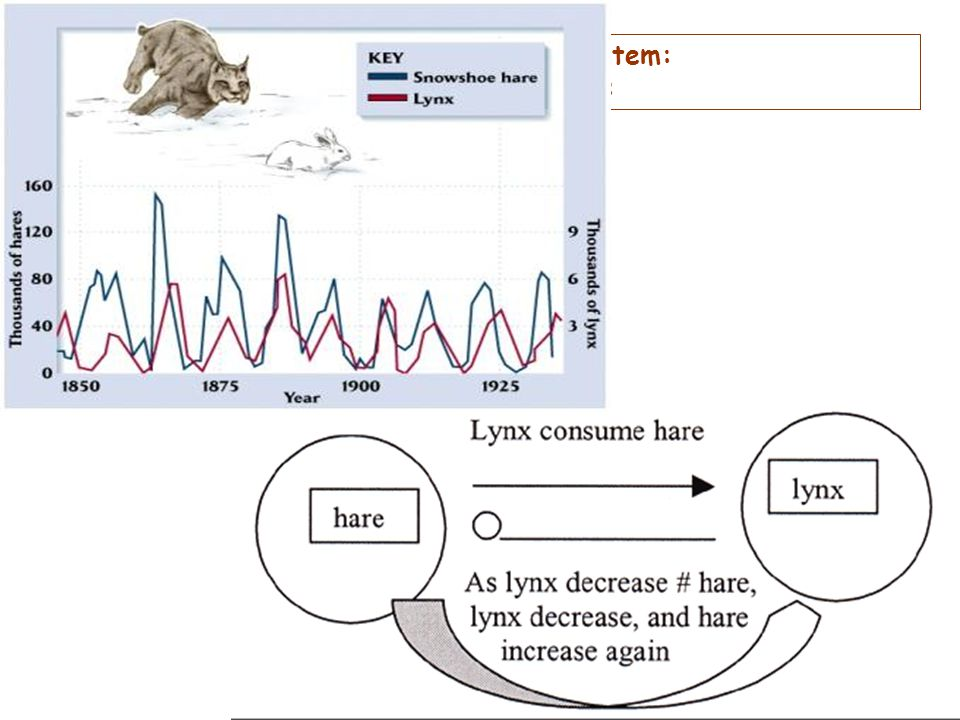 E.g. Negative feedback in a natural system: Cycles in lynx and hare populations