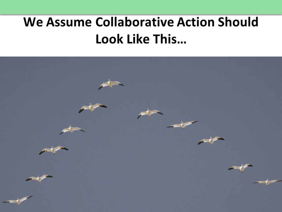 © E 3 Alliance, 2012 We Assume Collaborative Action Should Look Like This… 21