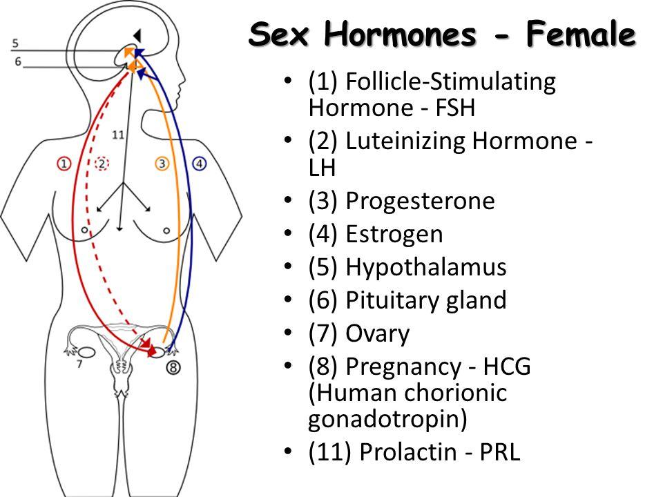 Sex Hormones - Female (1) Follicle-Stimulating Hormone - FSH (2) Luteinizing Hormone - LH (3) Progesterone (4) Estrogen (5) Hypothalamus (6) Pituitary
