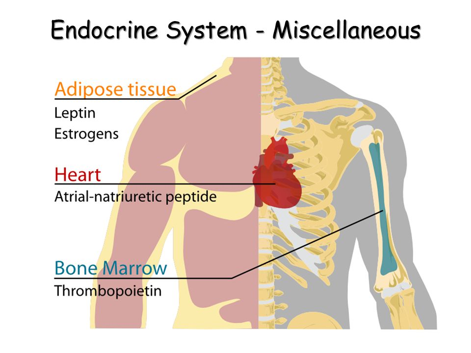 Endocrine System - Miscellaneous