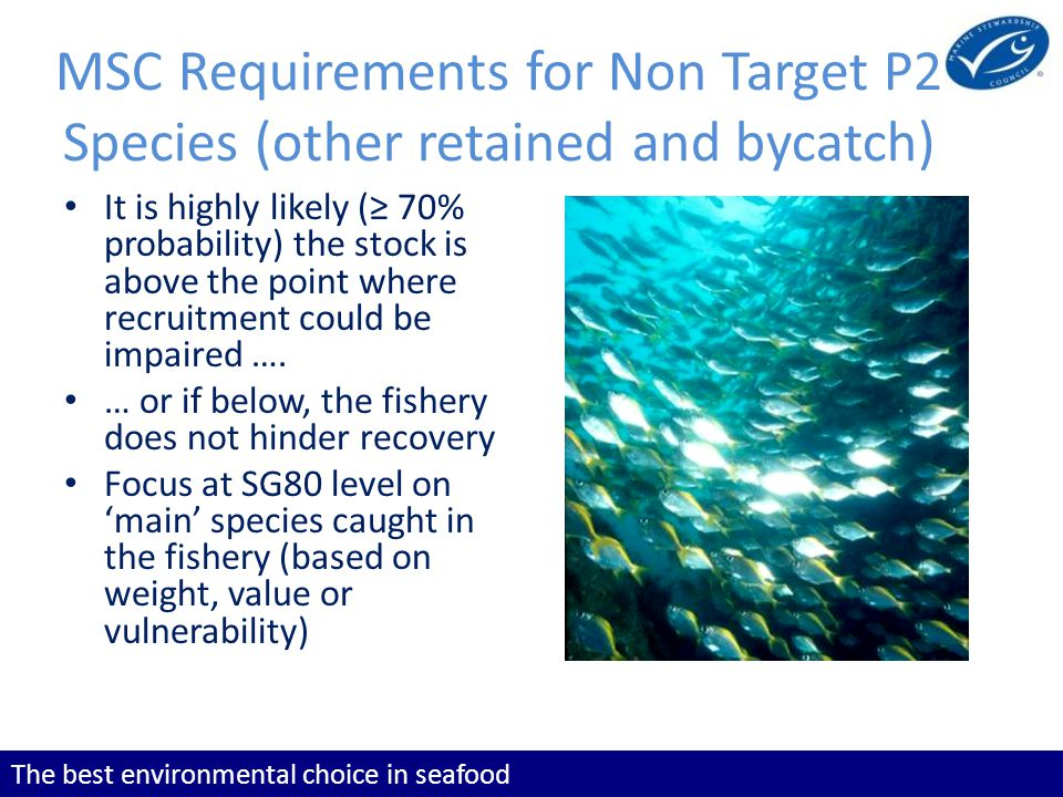 The best environmental choice in seafood MSC Requirements for Non Target P2 Species (other retained and bycatch) It is highly likely ( 70% probability) the stock is above the point where recruitment could be impaired ….