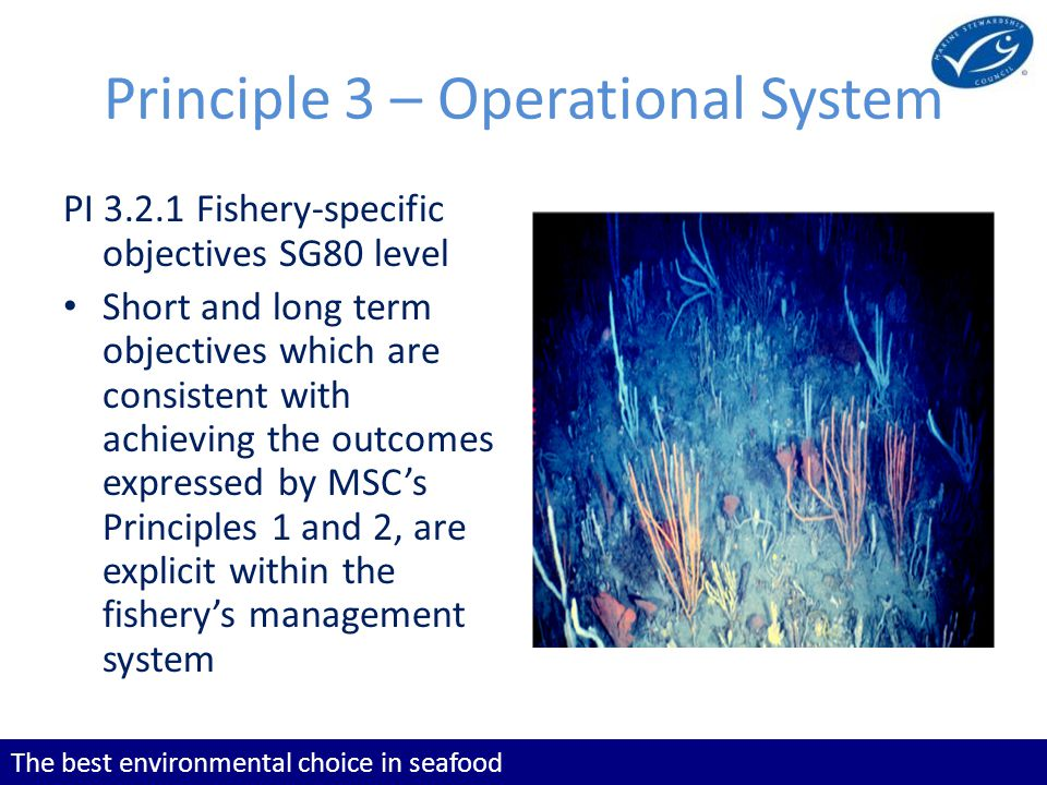 The best environmental choice in seafood Principle 3 – Operational System PI 3.2.1 Fishery-specific objectives SG80 level Short and long term objectives which are consistent with achieving the outcomes expressed by MSCs Principles 1 and 2, are explicit within the fisherys management system