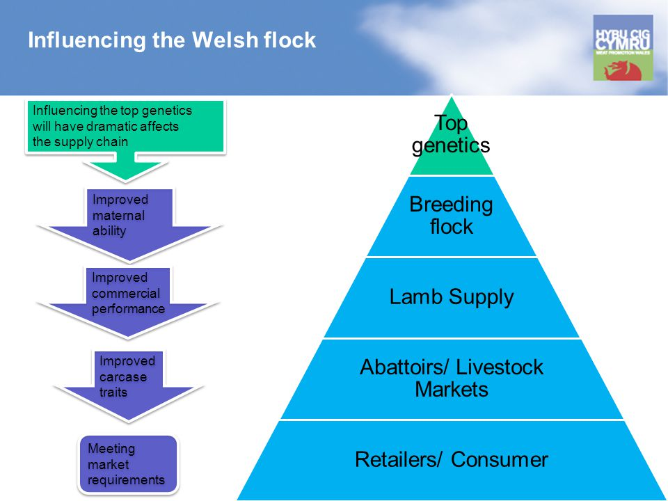 Influencing the Welsh flock Top genetics Breeding flock Lamb Supply Abattoirs/ Livestock Markets Retailers/ Consumer Improved maternal ability Improved maternal ability Improved carcase traits Improved carcase traits Improved commercial performance Improved commercial performance Influencing the top genetics will have dramatic affects the supply chain Influencing the top genetics will have dramatic affects the supply chain Meeting market requirements Meeting market requirements