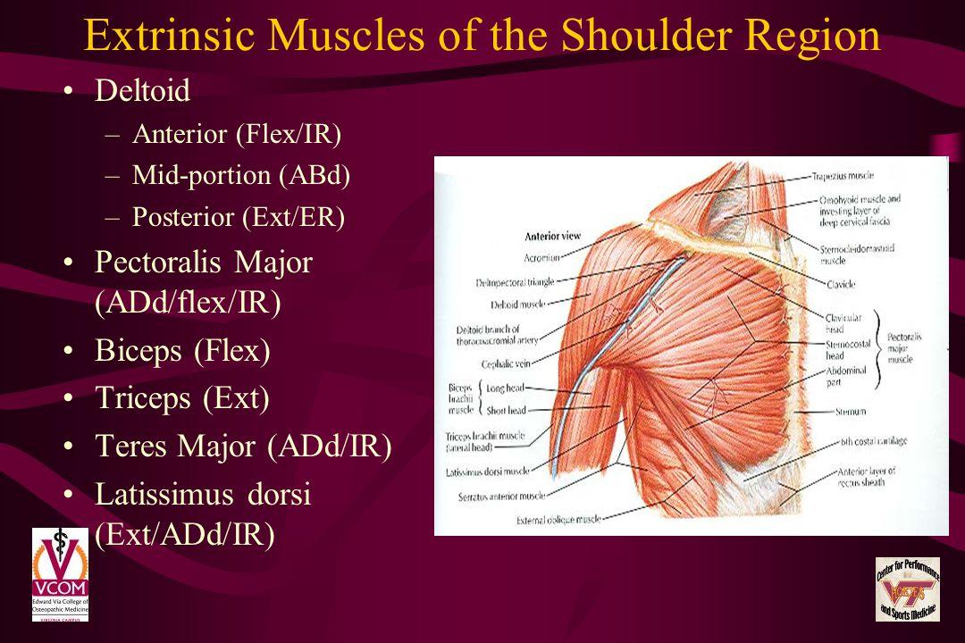 Extrinsic Muscles of the Shoulder Region Deltoid –Anterior (Flex/IR) –Mid-portion (ABd) –Posterior (Ext/ER) Pectoralis Major (ADd/flex/IR) Biceps (Fle