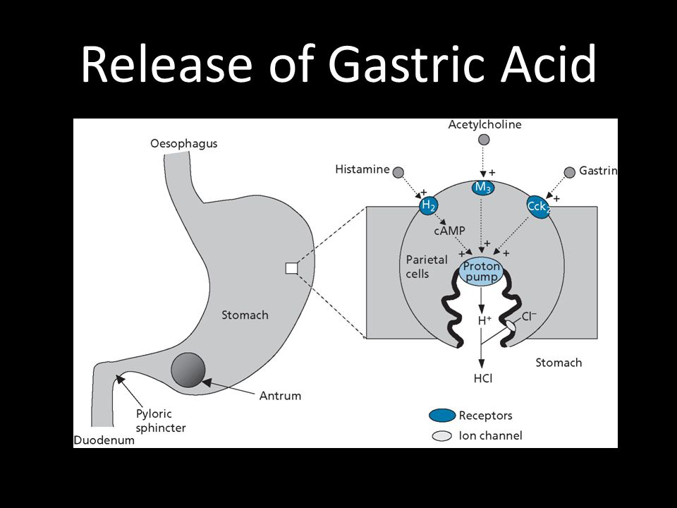 Release of Gastric Acid