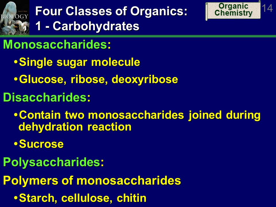 Organic Chemistry 14 Four Classes of Organics: 1 - Carbohydrates Monosaccharides: Single sugar molecule Single sugar molecule Glucose, ribose, deoxyri