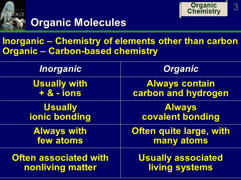 Organic Chemistry 34 Four Classes of Organics: 3 -Proteins Functions Support – Collagen Support – Collagen Enzymes – Almost all enzymes are proteins Enzymes – Almost all enzymes are proteins Transport – Hemoglobin; membrane proteins Transport – Hemoglobin; membrane proteins Defense – Antibodies Defense – Antibodies Hormones – Many hormones; insulin Hormones – Many hormones; insulin Motion – Muscle proteins, microtubules Motion – Muscle proteins, microtubules