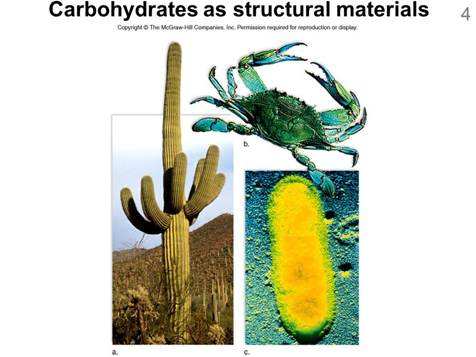 4 Carbohydrates as structural materials