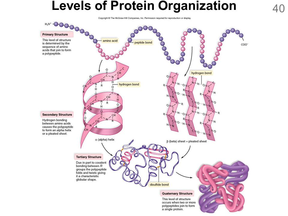 40 Levels of Protein Organization