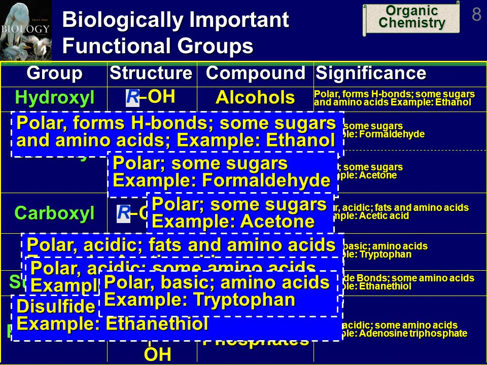 Organic Chemistry 19 Carbohydrates Examples: Polysaccharides (1) Polymers of monosaccharides Low solubility; not sweet to taste Examples Starch Starch ­Polymer of glucose ­Used for short-term energy storage Plant starch Plant starch Often branched chain Amylose, corn starch Animal starch Animal starchUnbranched Glycogen in liver and muscles