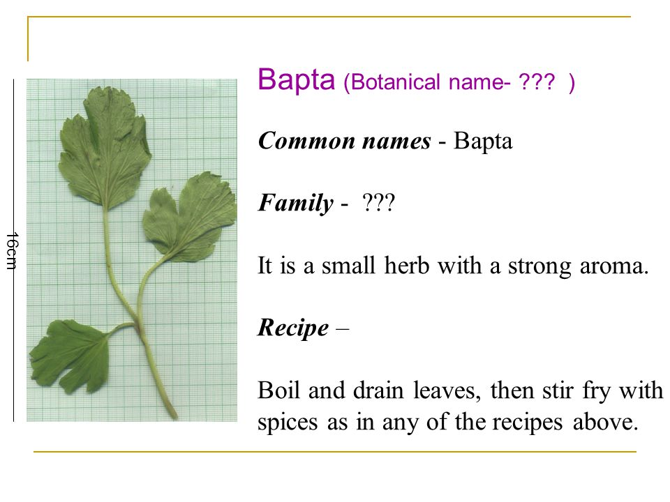 Bapta (Botanical name- . ) Common names - Bapta Family - .
