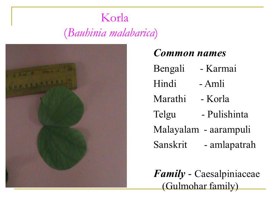 Korla (Bauhinia malabarica) Common names Bengali - Karmai Hindi - Amli Marathi - Korla Telgu - Pulishinta Malayalam - aarampuli Sanskrit - amlapatrah Family - Caesalpiniaceae (Gulmohar family)