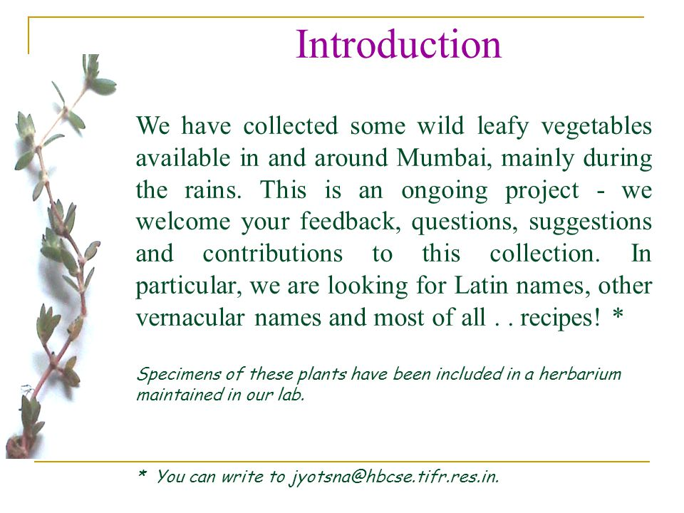 Introduction We have collected some wild leafy vegetables available in and around Mumbai, mainly during the rains.