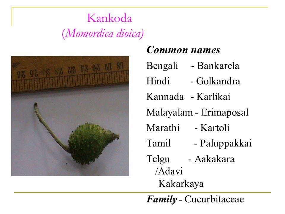 Kankoda (Momordica dioica) Common names Bengali - Bankarela Hindi - Golkandra Kannada - Karlikai Malayalam - Erimaposal Marathi - Kartoli Tamil - Paluppakkai Telgu - Aakakara /Adavi Kakarkaya Family - Cucurbitaceae
